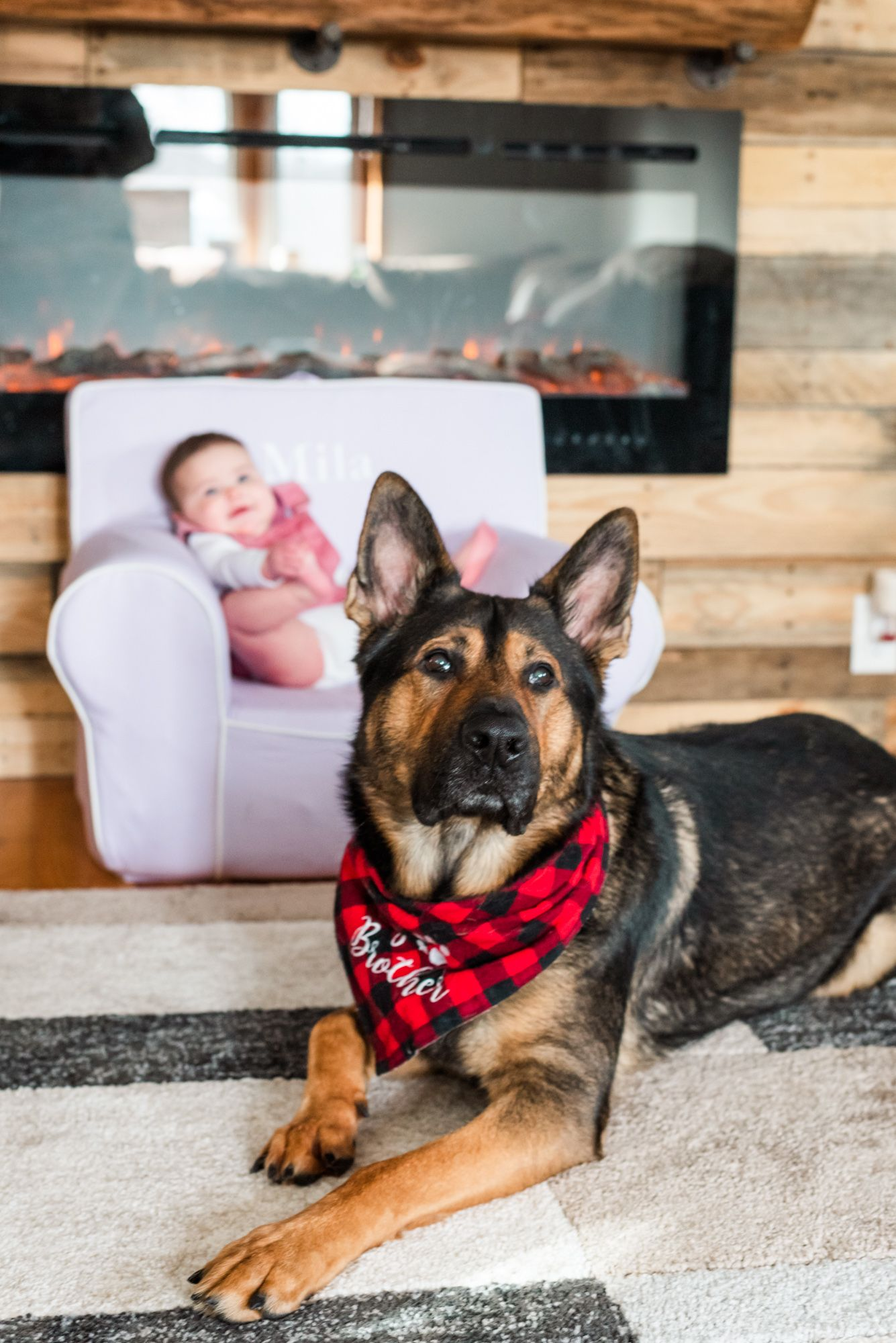 Lifestyle family photoshoot with german shepherd wearing bandana that says big brother in Gibsonia, Pennsylvania