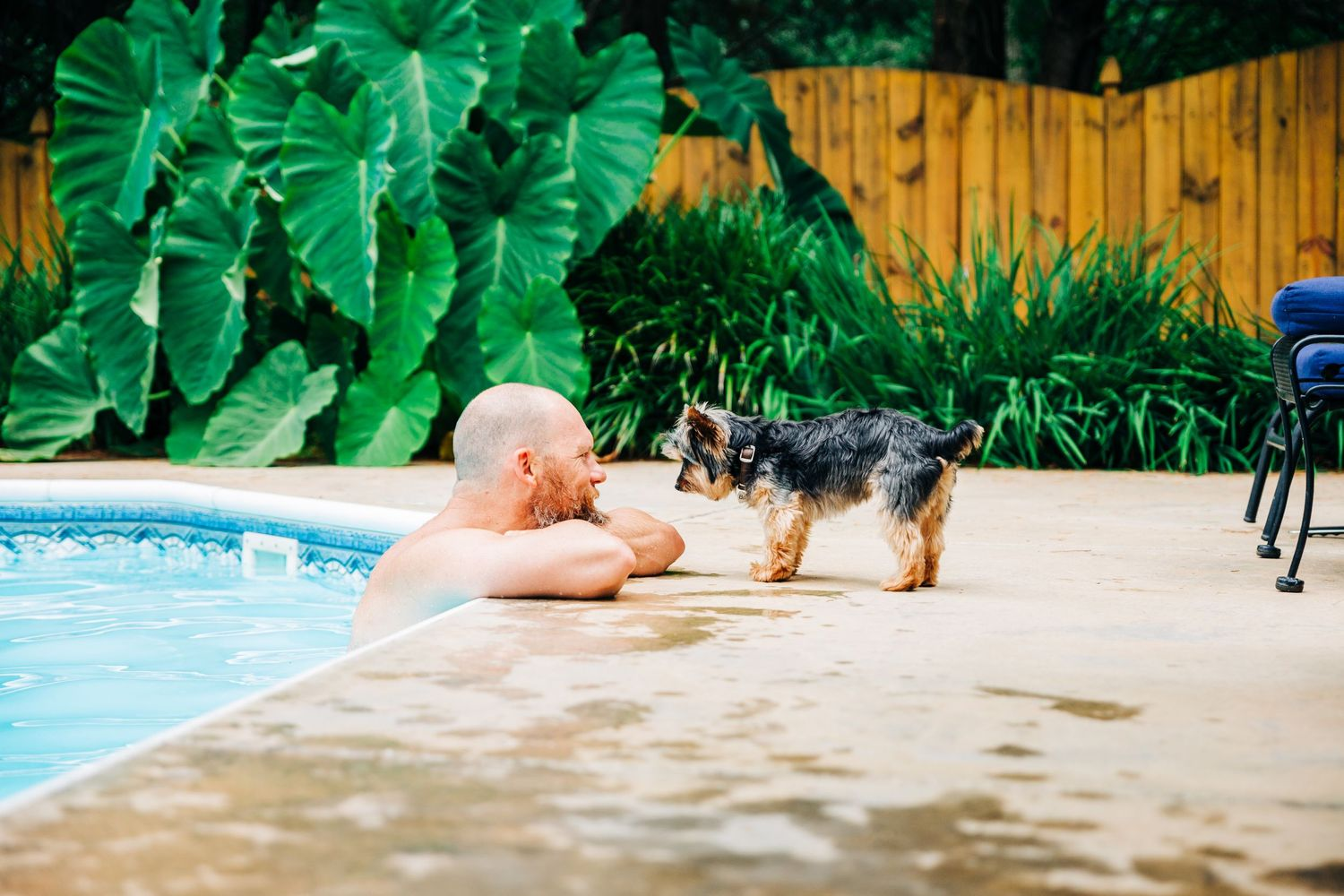 Dog greeting his owner by the pool in Charlotte, NC