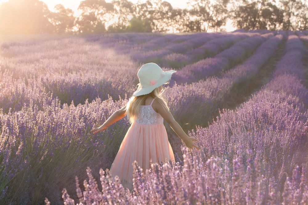 little girl walking in lavender farm in afternoon sun