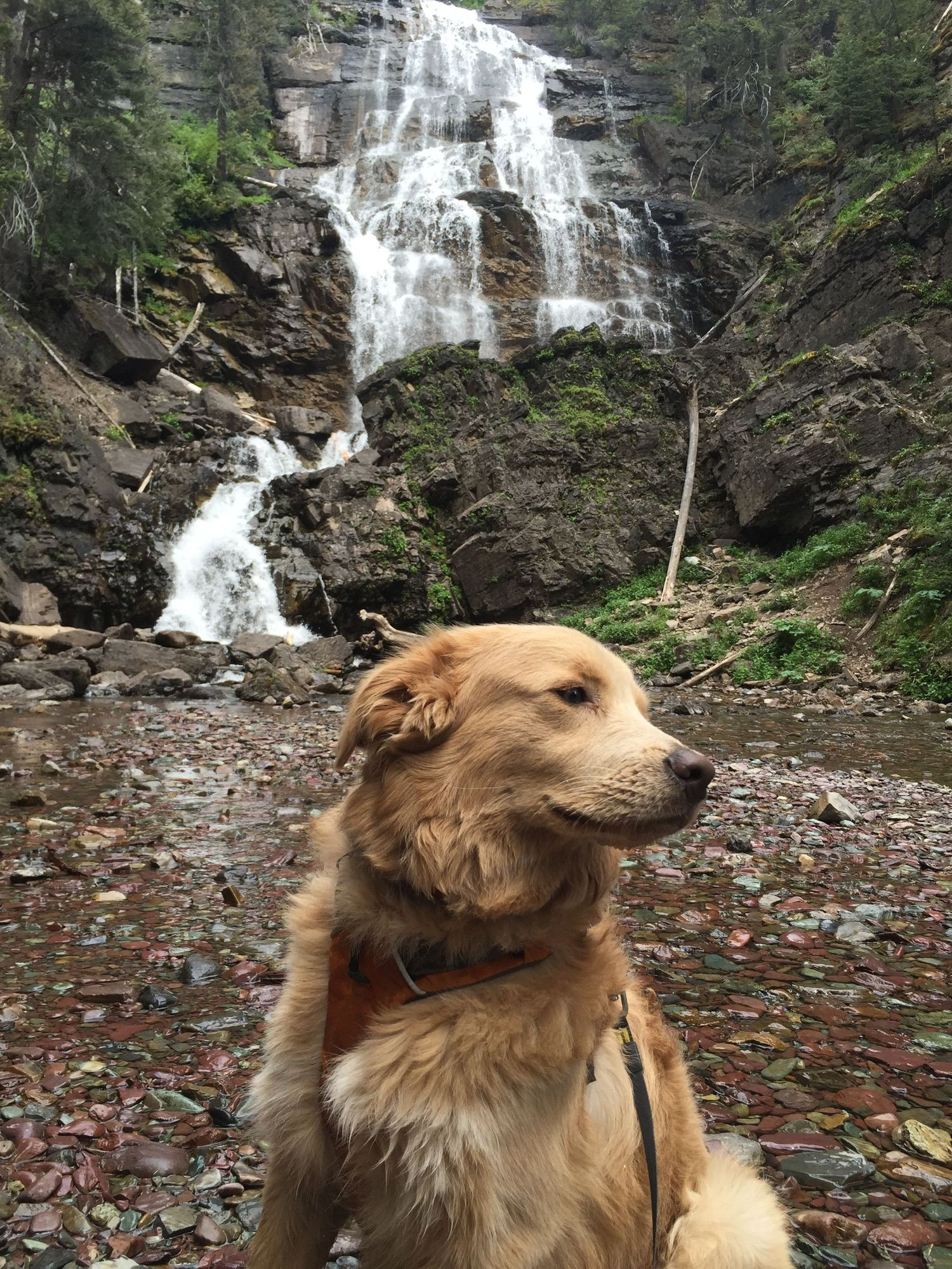 dog sitting in front of waterfalls