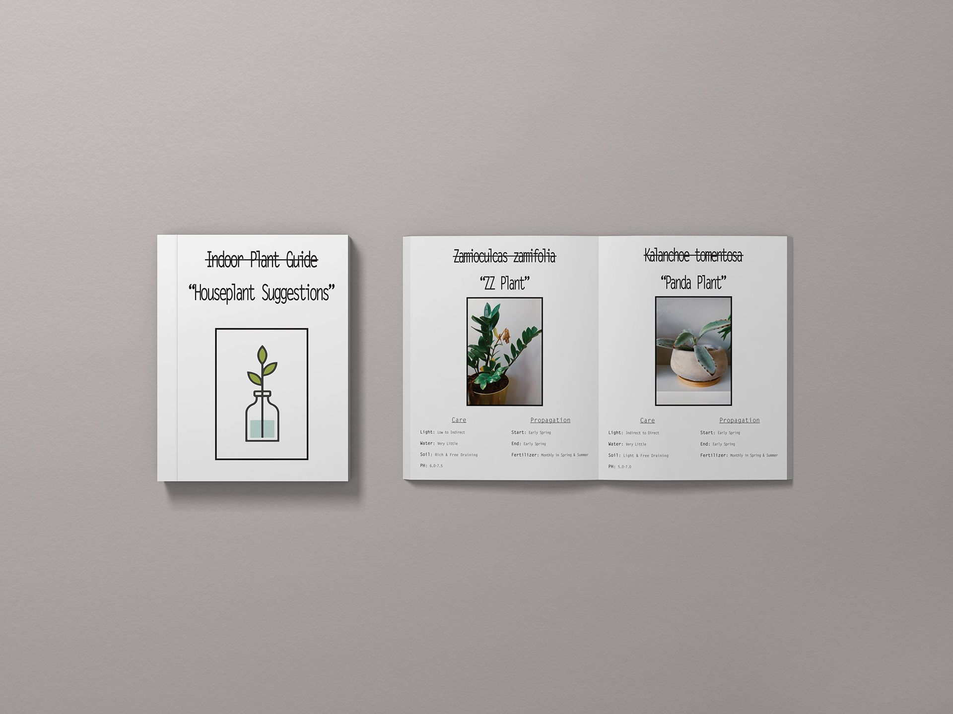 A design plant book guide. Shows succulents and how to care for them in a humorous way