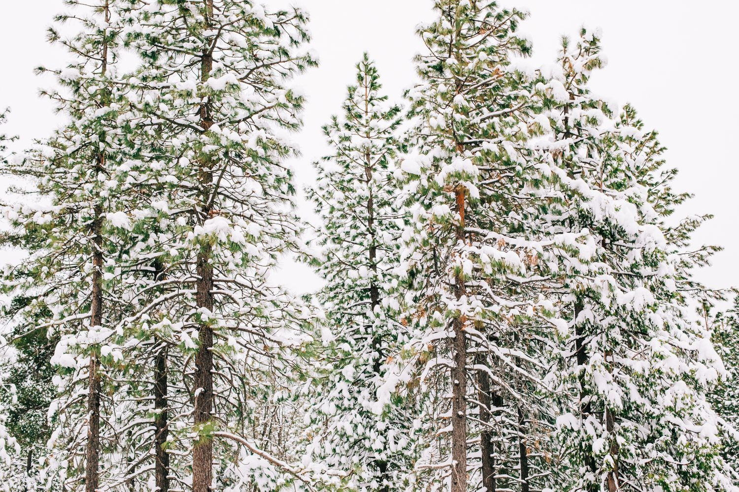 Nevada County snow along Highway 20 and in Truckee by Lenkaland Photography | Winter and Travel Photo
