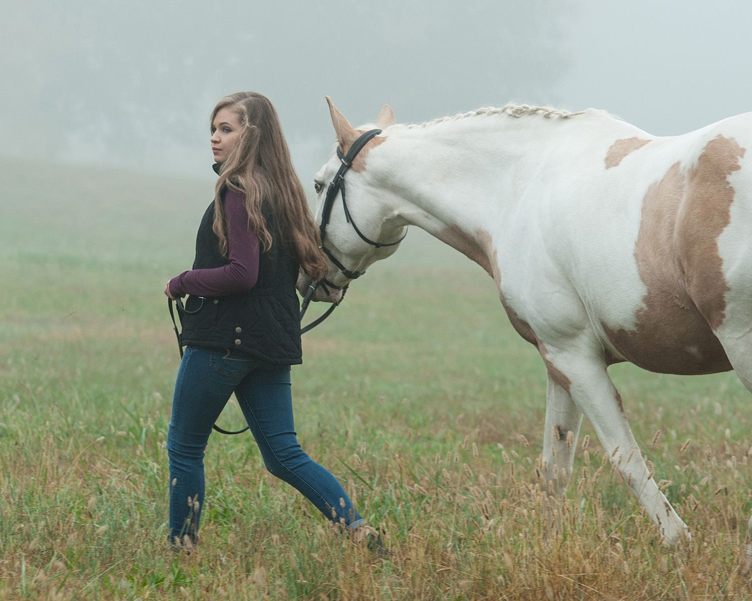 Equestrian foggy morning walk