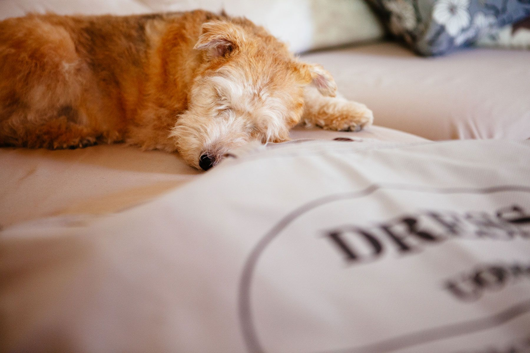photograph of dog sleeping near wedding dress at Italian wedding