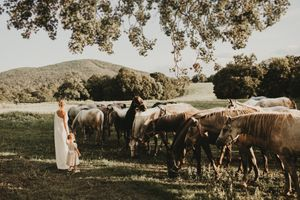 Wedding with horses in Lipica, Slovenia