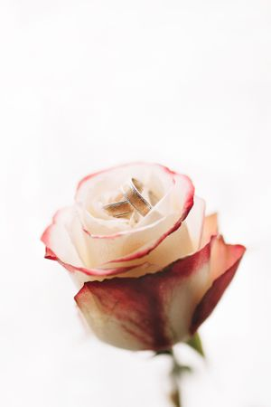 Wedding ring in a rose