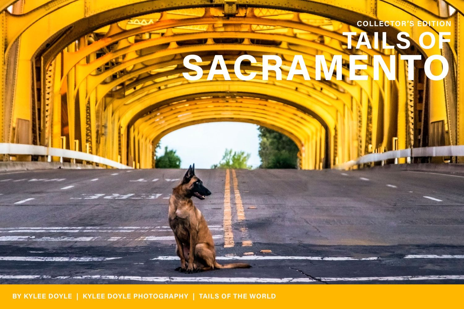 A Belgian Malinois dog sitting on the road in front of Tower Bridge in Sacramento, California.