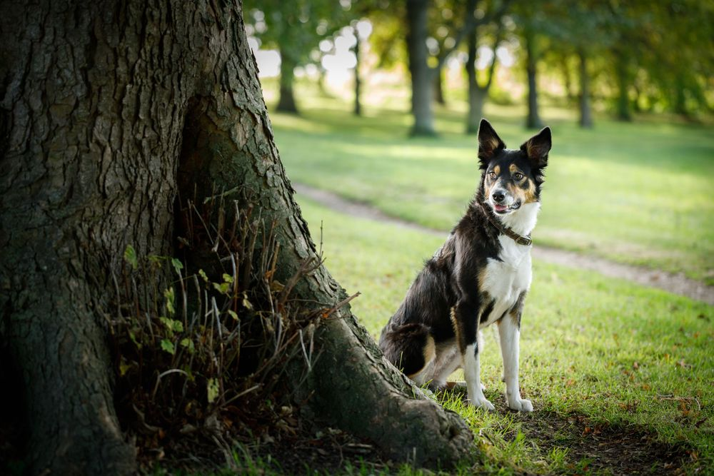 Dog photography in Wantage, Oxfordshire