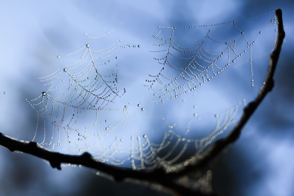 Dew on web Stock Image © COPYRIGHT. 2020. Dragon Papillon Photography. All Rights Reserved.