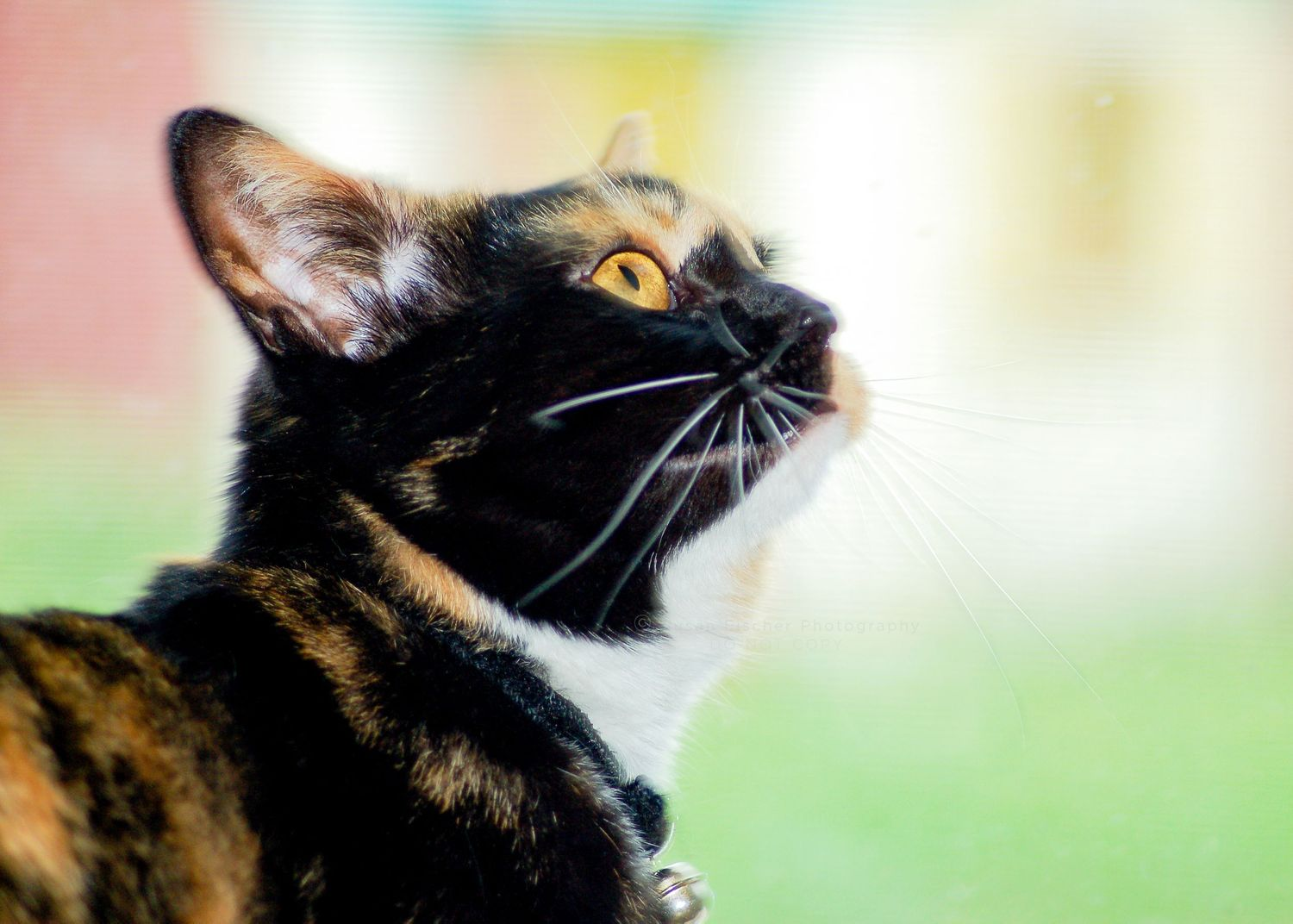 side view calico cat with yellow eyes