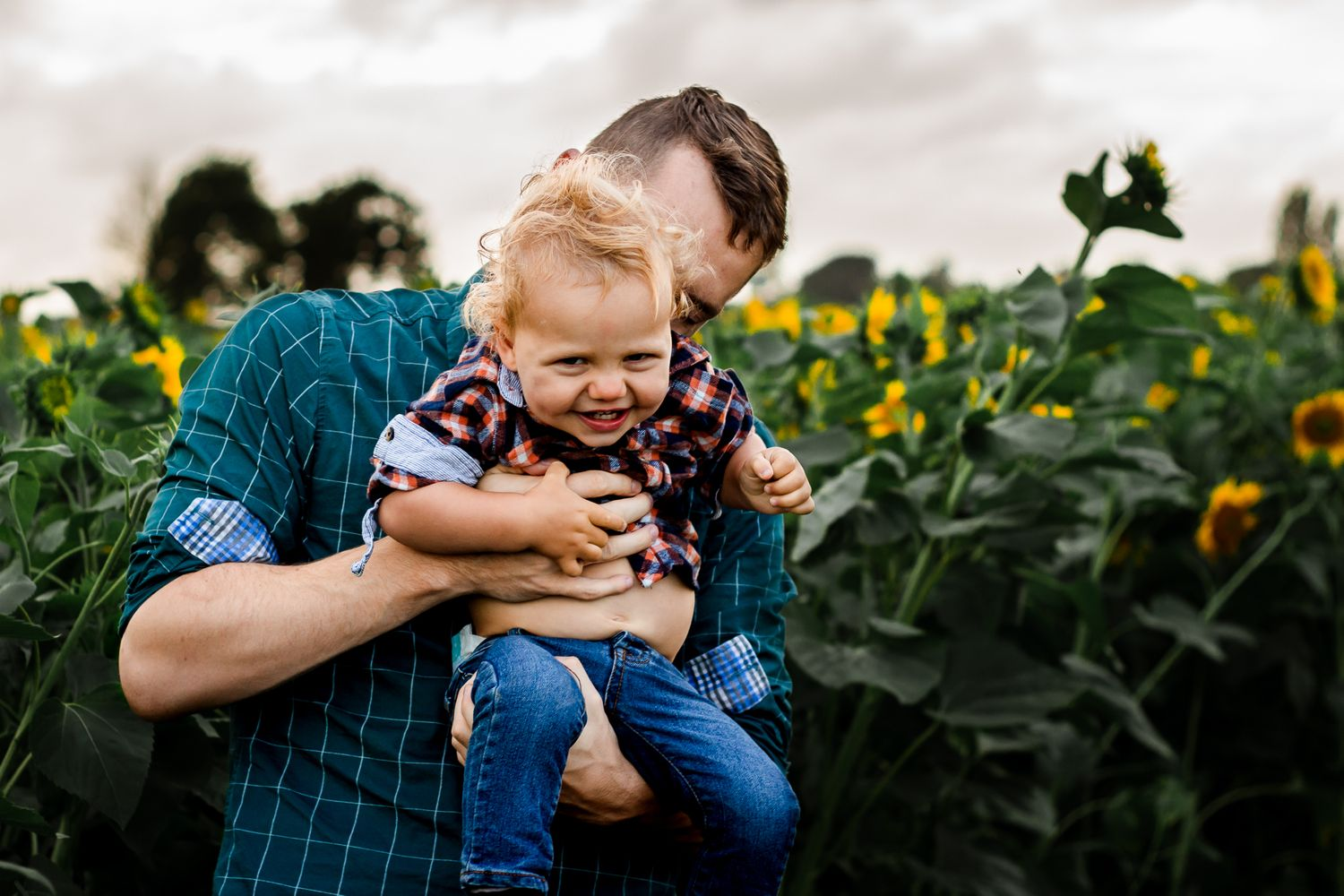 On and overcast day In a sunflower field on Hayling Island a dad tickles his one year old Son.