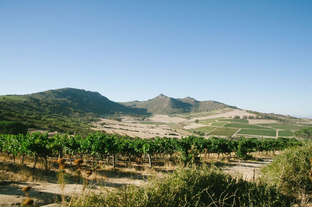 vineyard landscape photographer