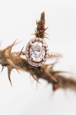 macro shot of an engagement ring on a thorny branch with a white background valerie miles photography ottawa wedding