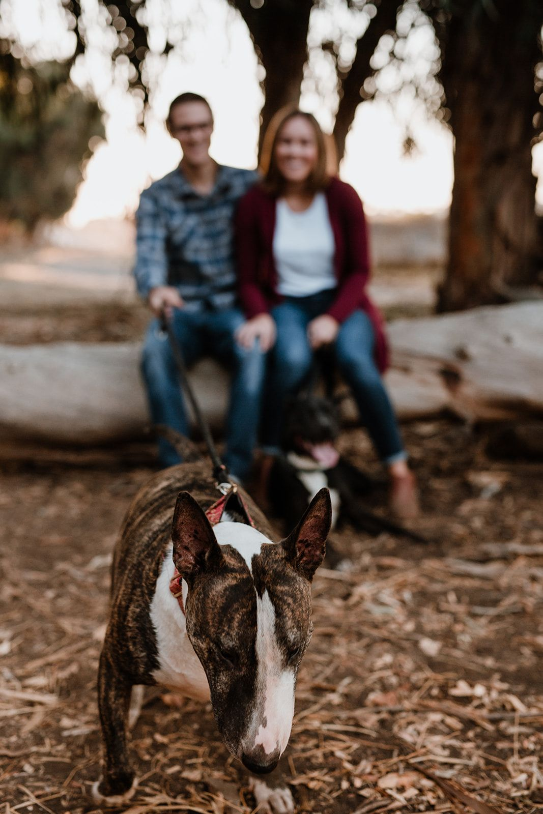 Edith Hogan Photography Family with Dogs Long Beach