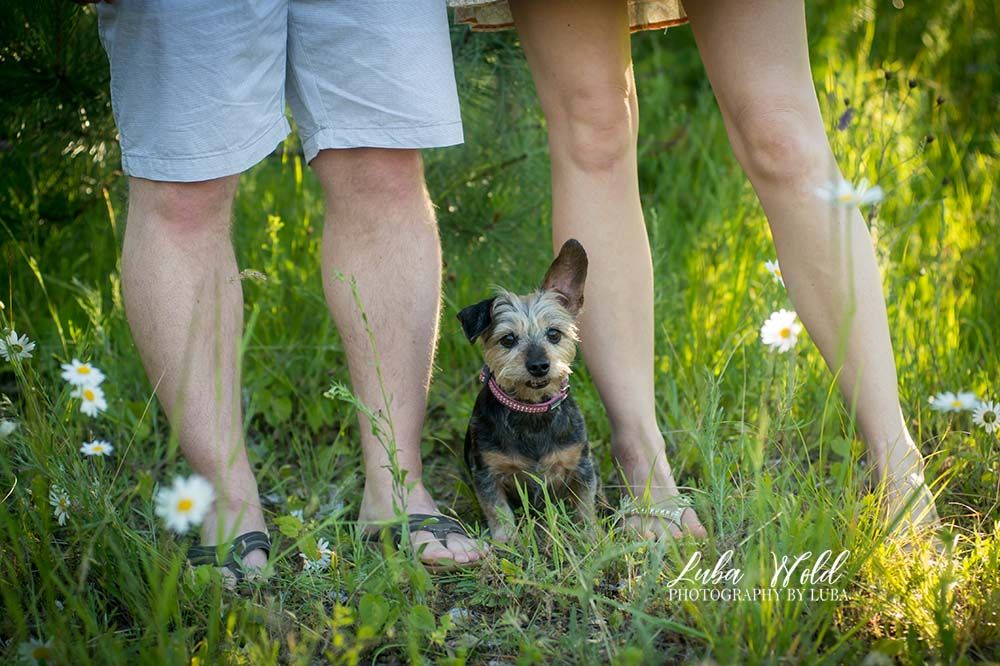 engagement photo with couple's legs and a small dog in a daisy field in Coeur d' Alene photographer luba wold