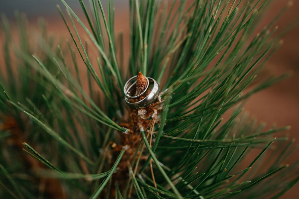 mountain wedding, rings, small wedding, colorado wedding ideas, pine, fun, unique, elope colorado, best of co weddings