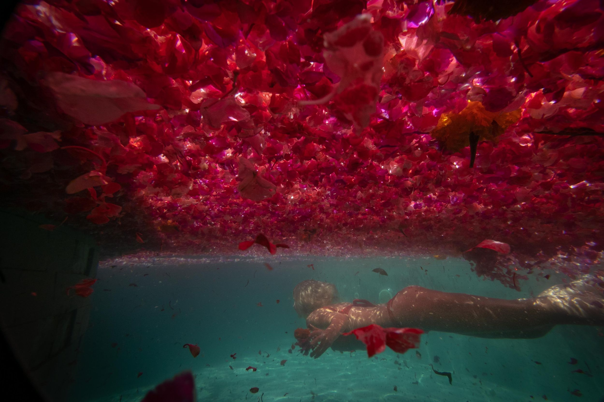 A girl swimming beneath a sea of red flowers