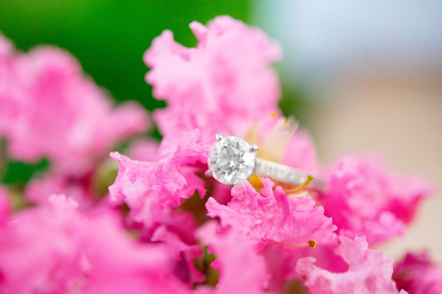 round white gold diamond engagement ring on a hot pink crepe myrtle bush
