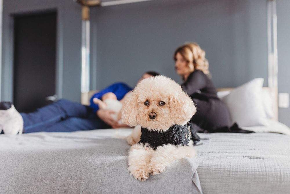 dog laying on the bed with her parents during in home Chicago Lifestyle newborn photography session