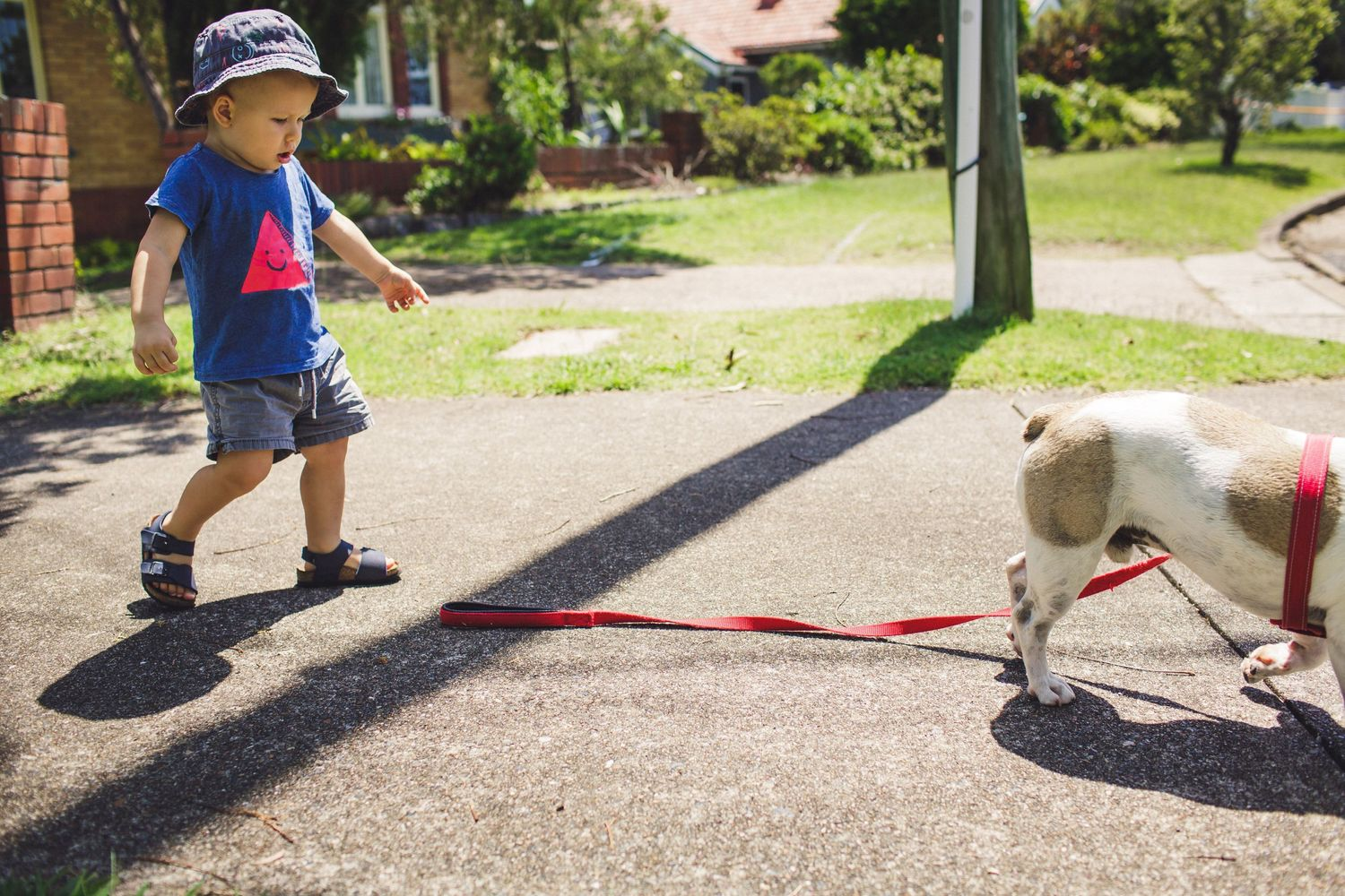 Child trying to get dog's lead