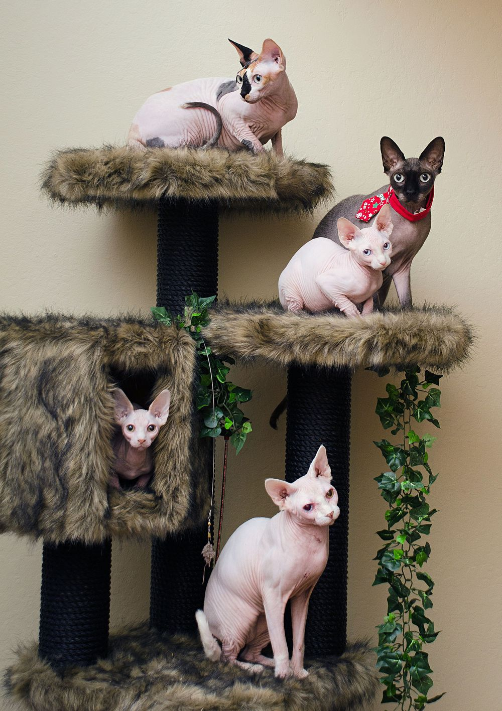 hairless sphynx cats on cat tower with leaves