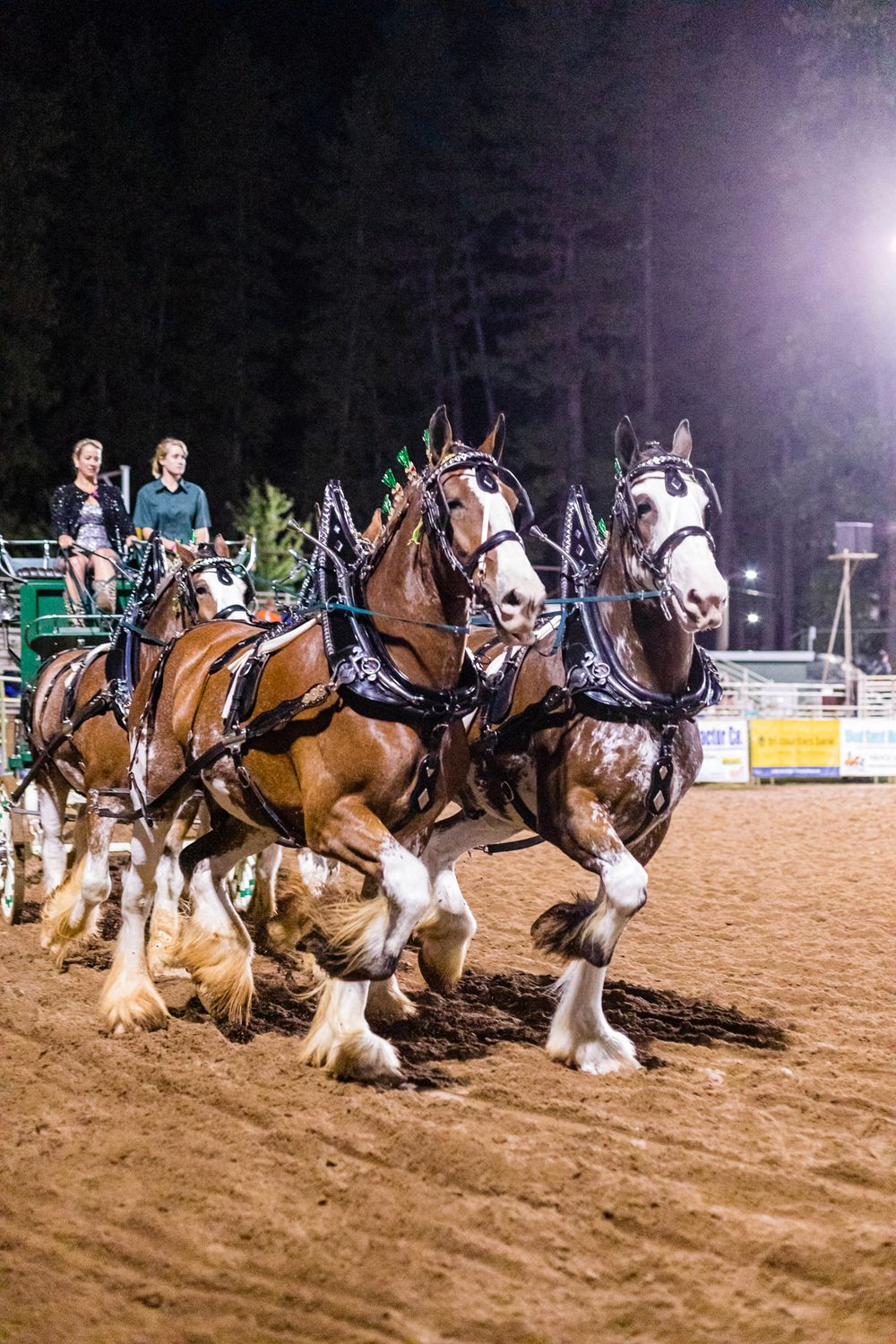 Draft Horse Classic at the Nevada County Fairgrounds |Lenkaland Photography