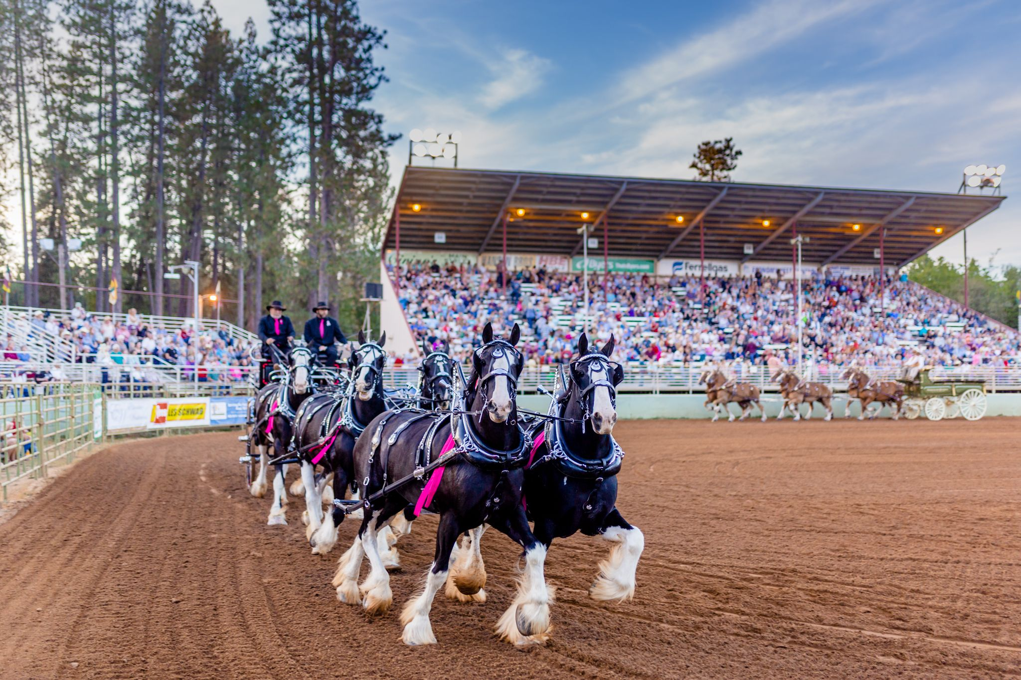 draft horses at the nevada county fairgrounds