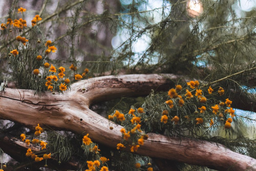 close up of natural wedding alter in the woods with yellow wild flowers