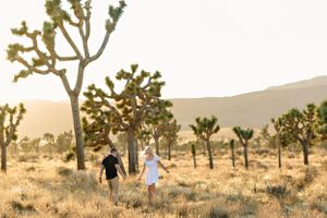 joshua trees with couple