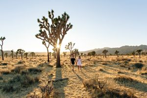 joshua tree national park sunset with couple