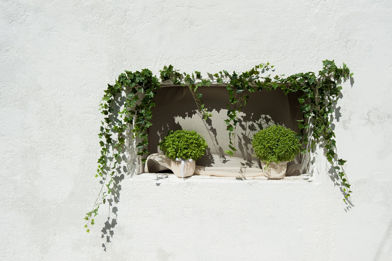 basils decorate a closed window in the island of Poros