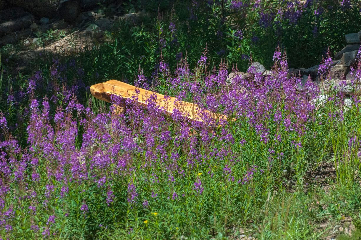 wild flowers and a bench