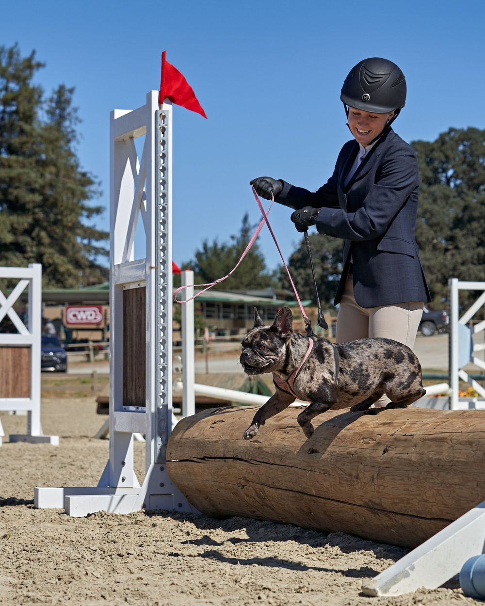 Woodside Pony Club Dog Jumping