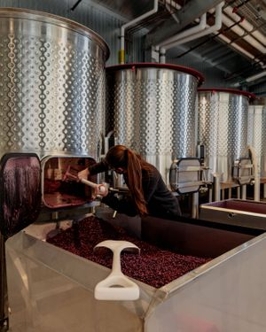Assistant winemaker emptying an open top fermentor full of syrah in preparation for pressing the fermented wine.