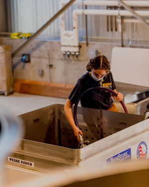Winemaking intern pumping over a fermentor of pinot noir at Peake Ranch Winery in Buellton, California