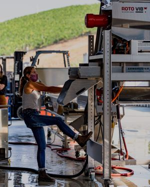 Winemaker Wynne Solomon of Peake Ranch Winery prepping the destemmer for crushing of pinot noir grapes during harvest