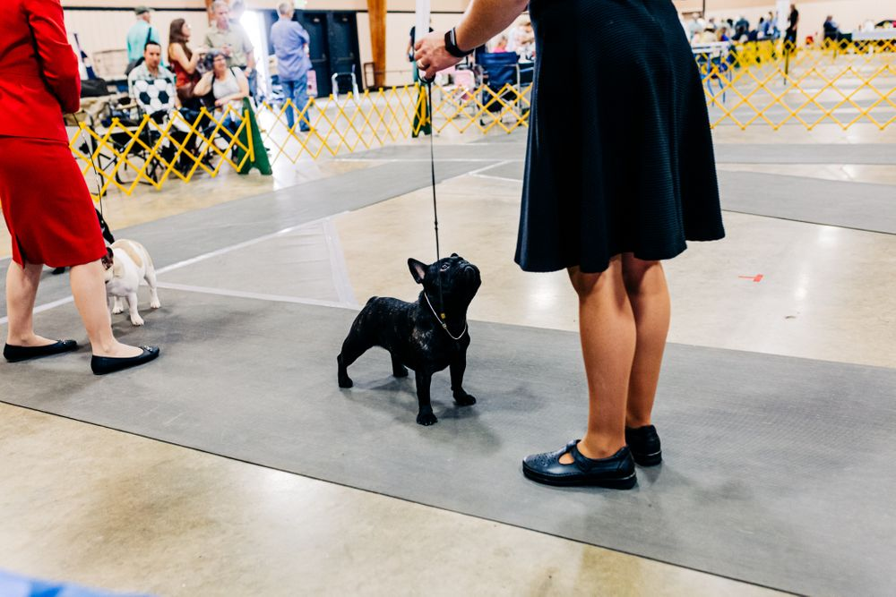 Gold Country Kennel Club AKC Dog Show at the Nevada County Fairgrounds | Lenkaland Photography Dog & Pet Portraits