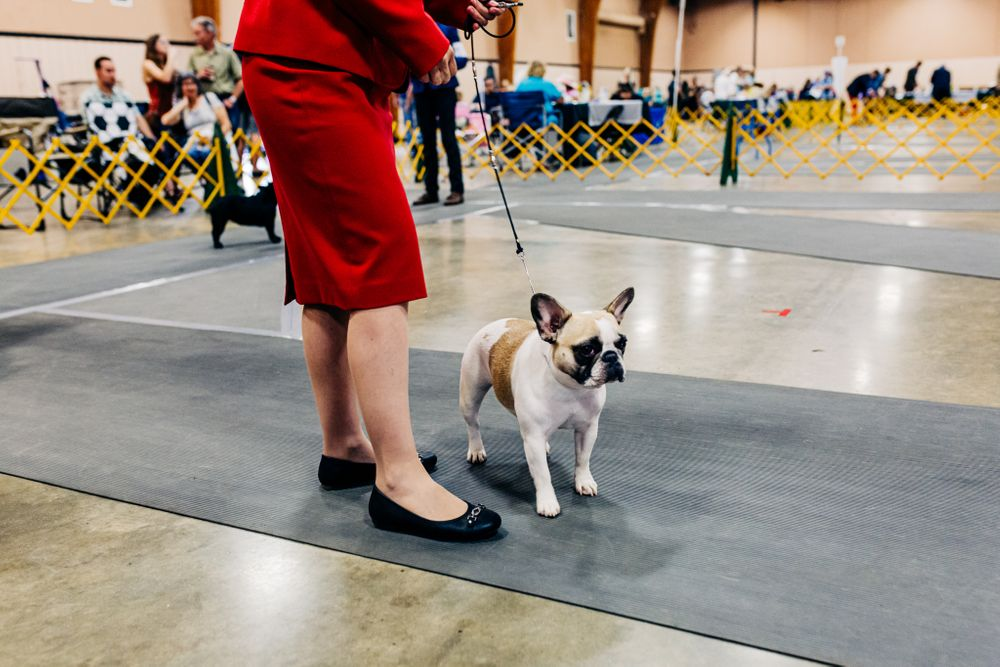 Gold Country Kennel Club AKC Dog Show at the Nevada County Fairgrounds | Lenkaland Photography