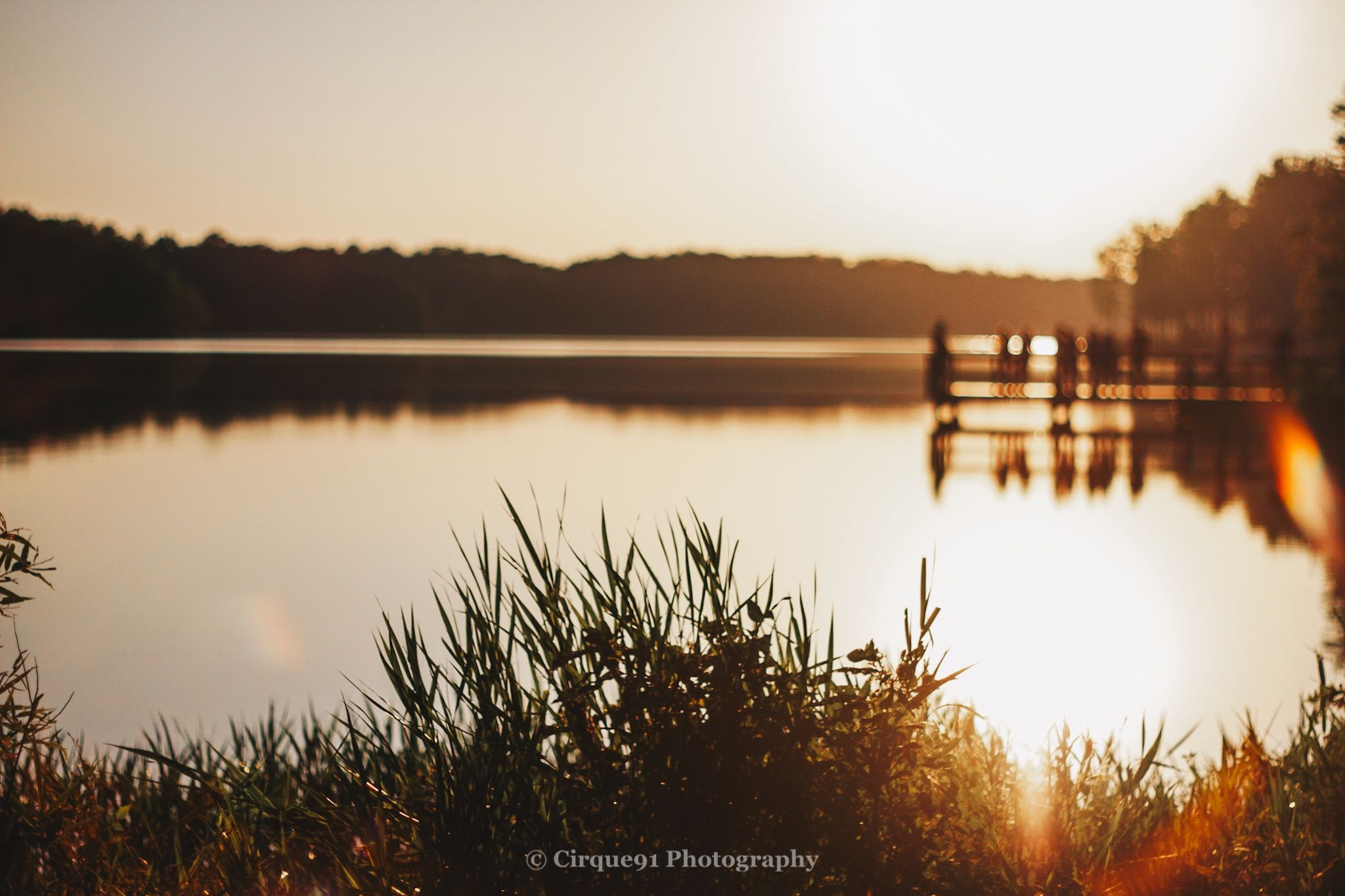 grass on the shore of reidsville lake during golden hour