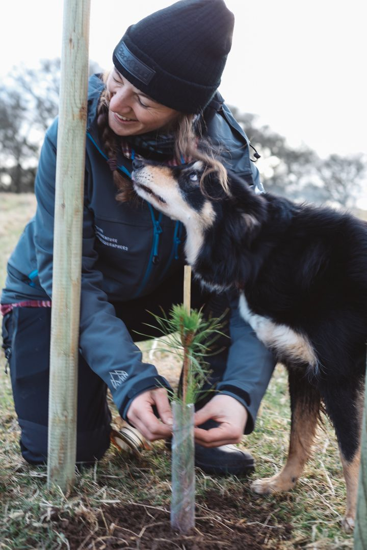 Molly the Collie dog helping us plant trees in Aberfoyle, Scotland