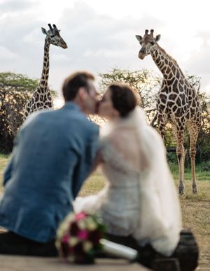 Couple kissing with giraffes watching