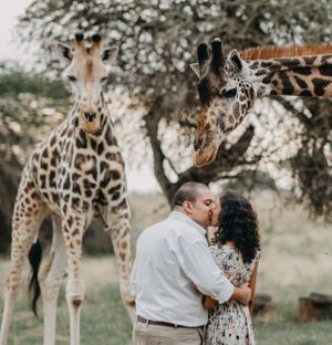 Beautiful couple kissing with giraffes onlooking