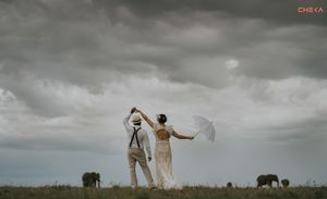 Newly married couple dancing with elephants in Masai Mara