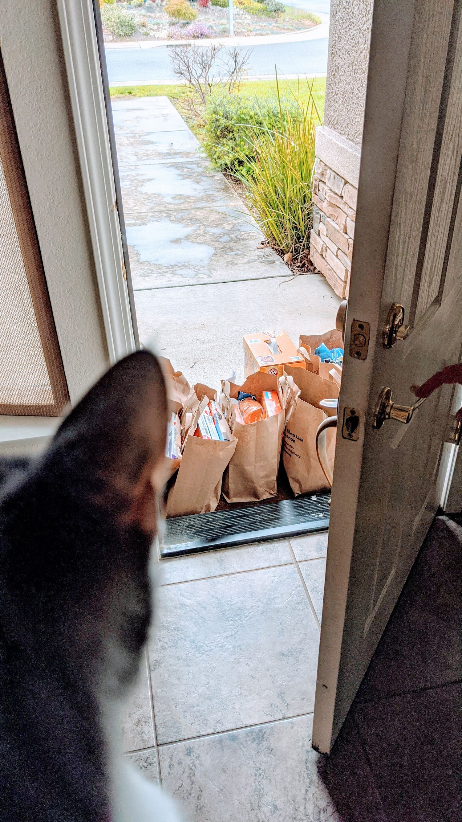 cat looking out at groceries being delivered on the front porch