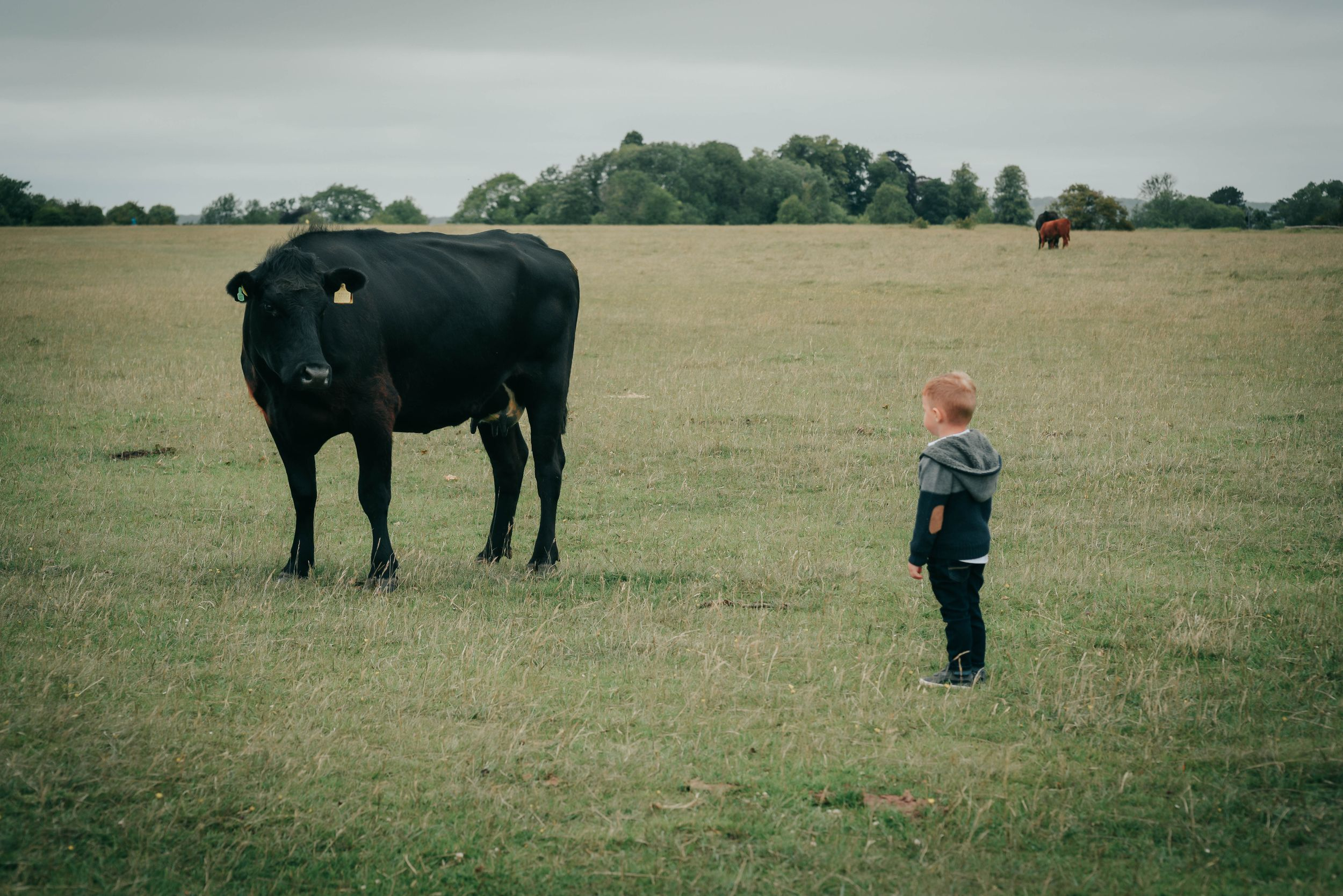 Zara Davis Photography Stroud Gloucestershire Cotswolds Family kid and cow