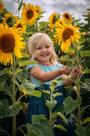 Zara Davis Photography Stroud Gloucestershire Cotswolds Family sunflowers little girl in sunflowers