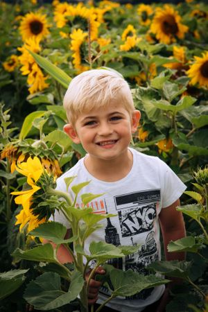 Zara Davis Photography Stroud Gloucestershire Cotswolds Family sunflowers little boy in sunflowers