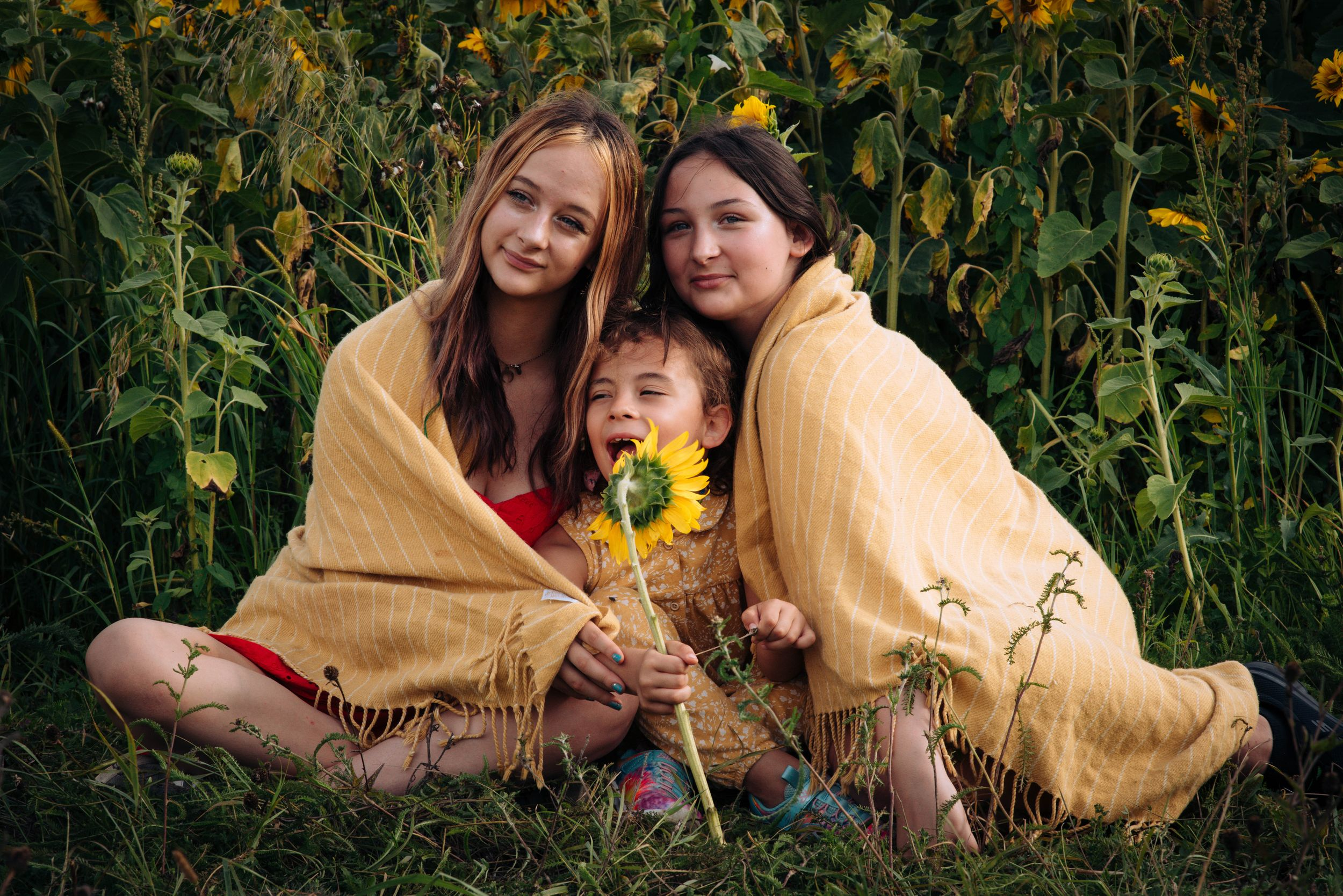 Zara Davis Photography Stroud Gloucestershire Cotswolds Family sunflowers 3 sisters in banket