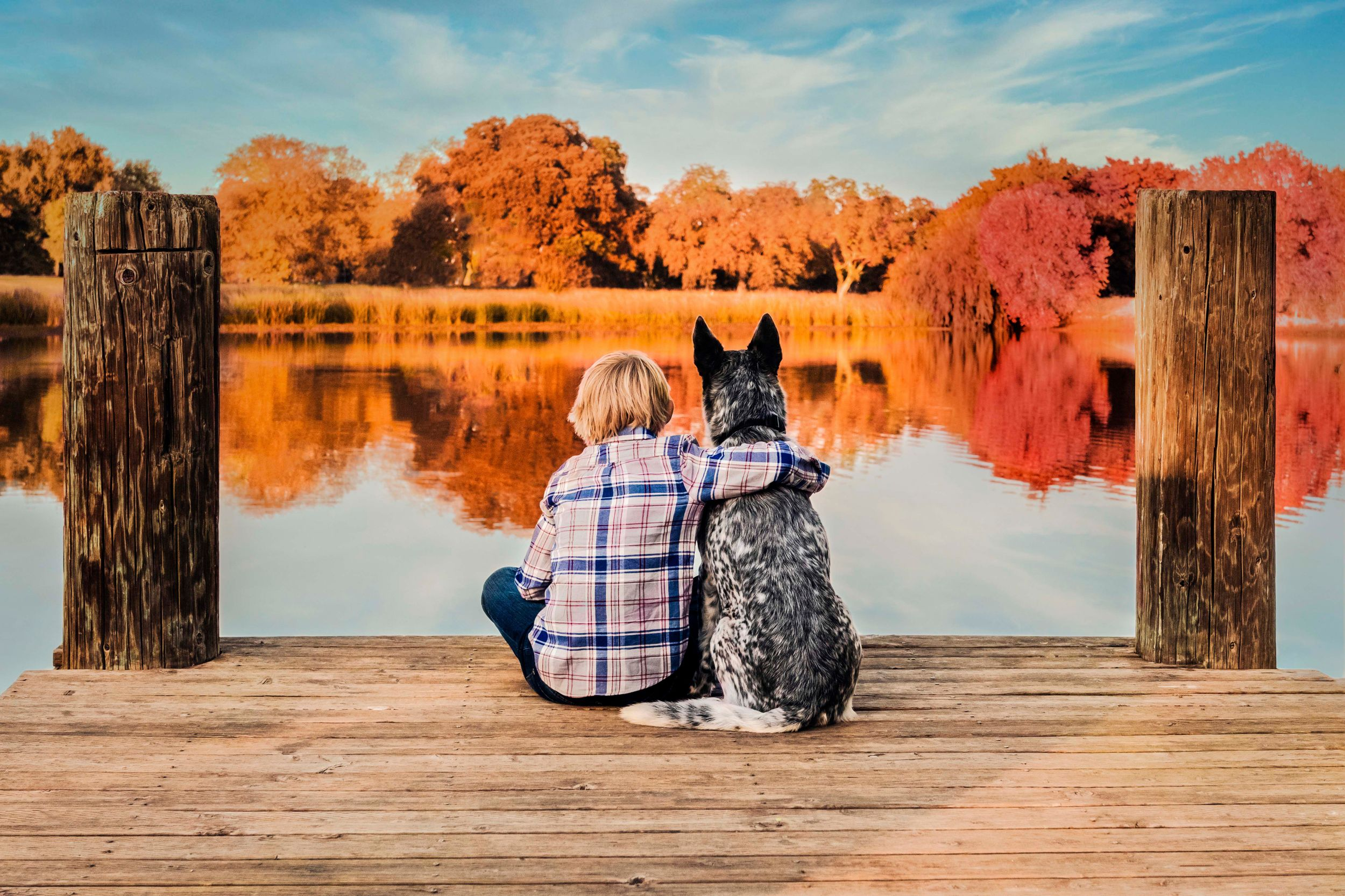 A young boy in a plaid shirt sitting on a dock with his arm around a blue heeler dog, with a pond and autumn trees