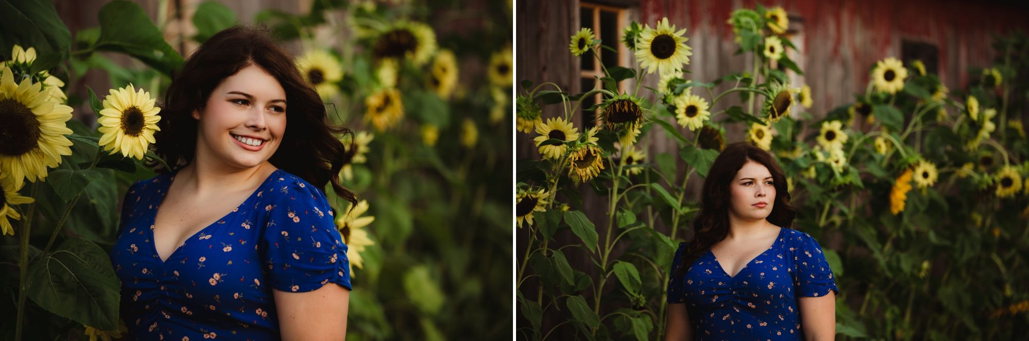High school senior girl with dark hair and dark eyes wearing a blue shirt standing in sunflowers.